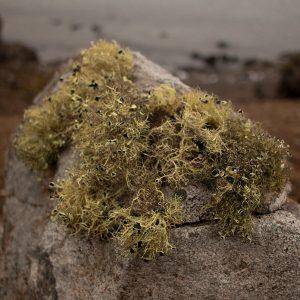 Vegetación creciendo sobre roca